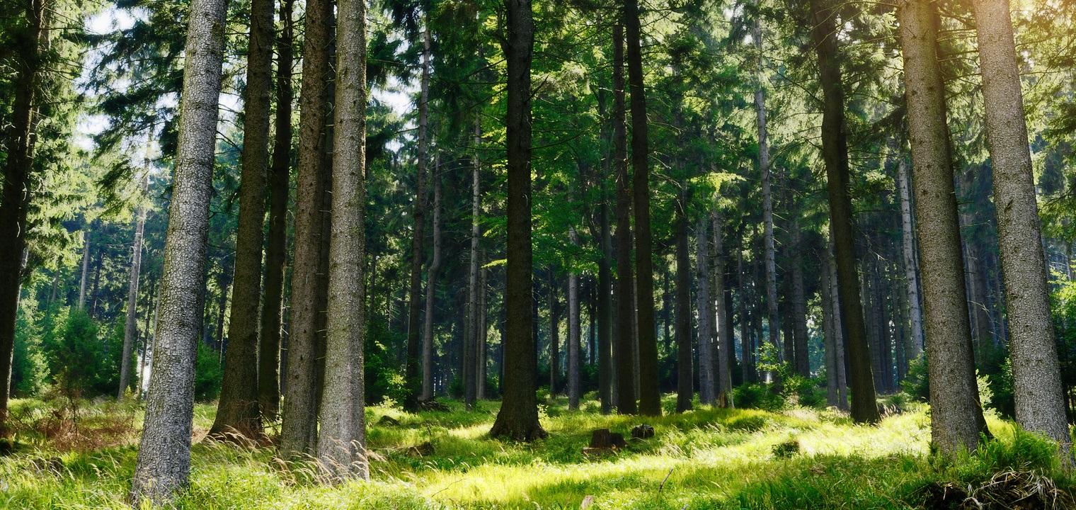 Forstwirt: Ausbildung & Beruf