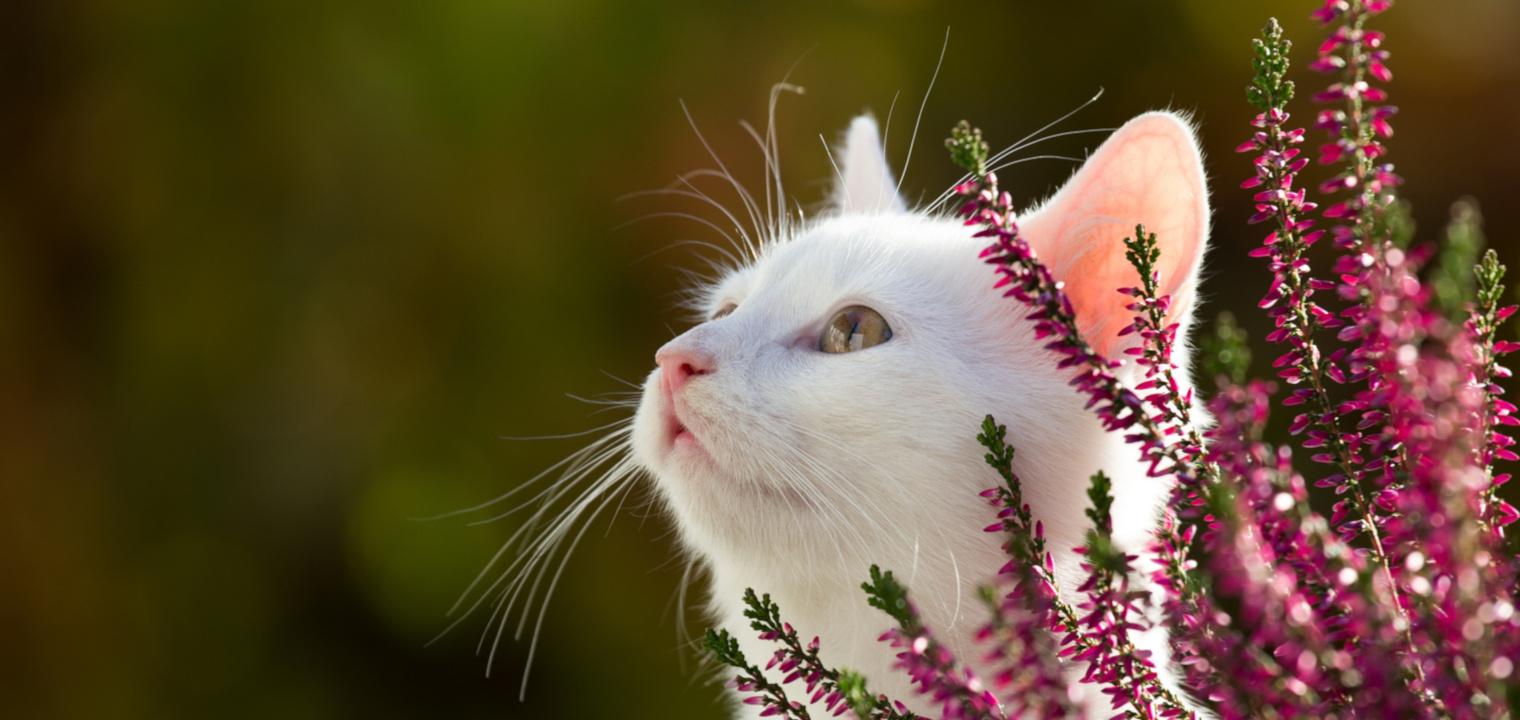Tierheilpraktiker werden