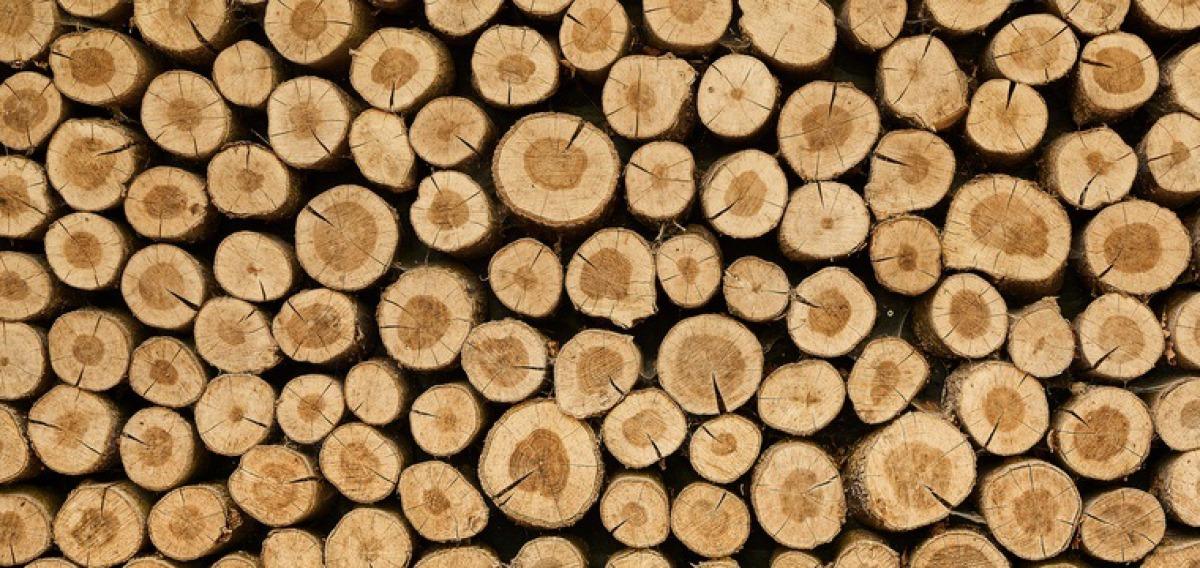 Holztechnik-Studium