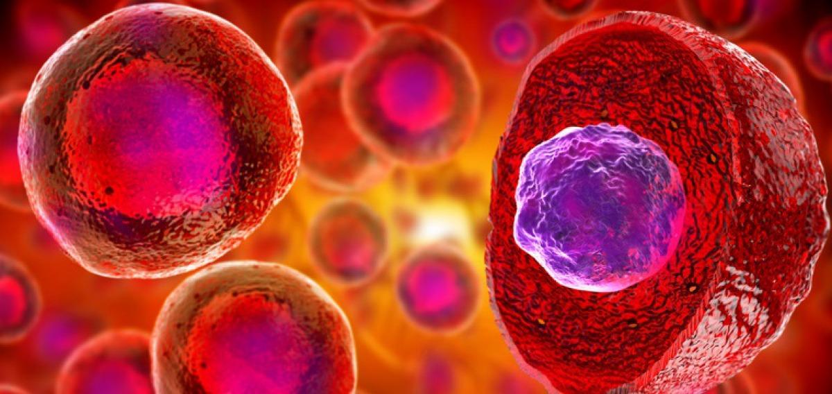Molekulare Medizin Studium