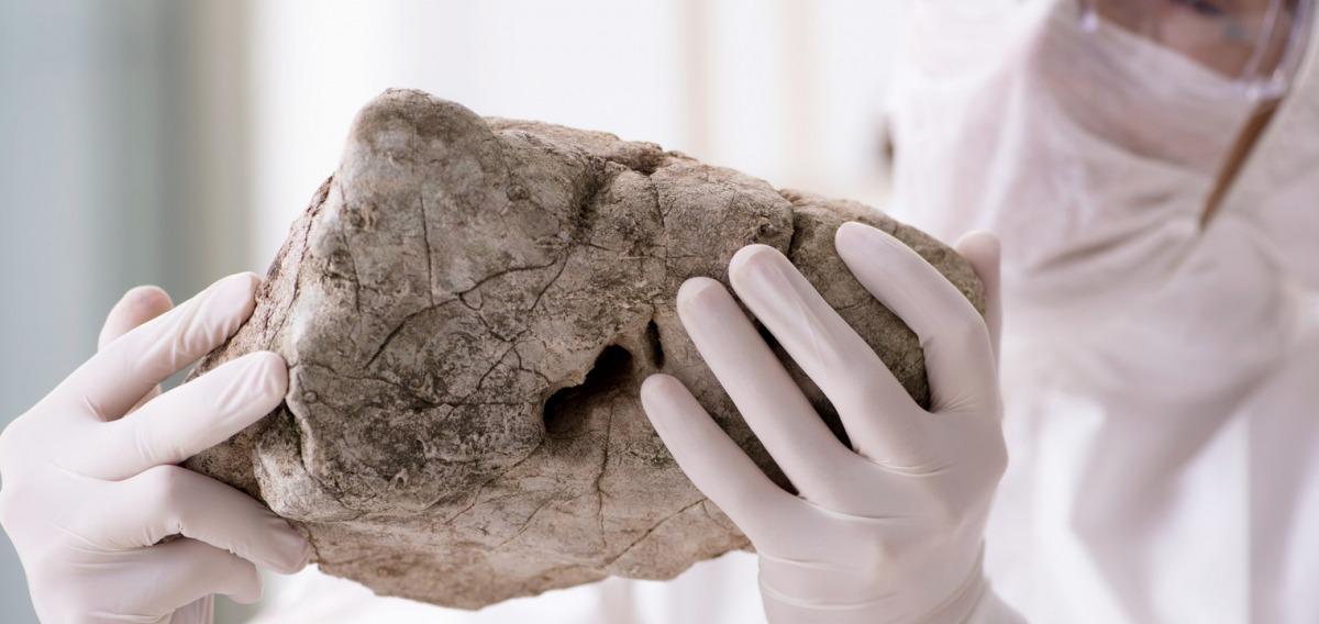 Paläontologe: Ausbildung & Beruf