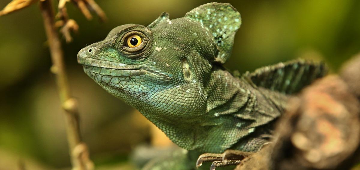 Zoologe: Ausbildung & Beruf