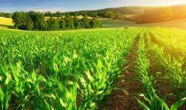 Agrarwirtschaft-Studium