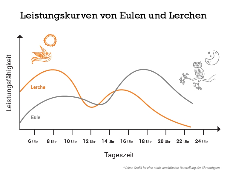 Leistungskurven von Eulen und Lerchen